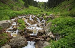 Mountain stream. Mountain stream among the stones and plants in the summer morning Stock Photos