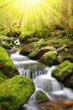 Mountain stream in the National park Sumava Stock Photos