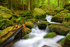 Mountain stream in the National park Sumava Stock Image