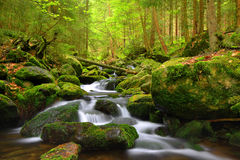 Mountain stream in the national park Sumava. Czech Republic Royalty Free Stock Image