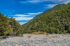 Mountain Stream. In native beech forest. Hawden river, Mid Canterbury, New Zealand. Southern Alps Stock Photography