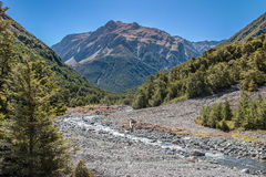Mountain Stream. In native beech forest. Hawden river, Mid Canterbury, New Zealand. Southern Alps Stock Photos