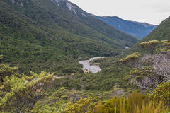 Mountain Stream. In native beech forest. Hawden river, Mid Canterbury, New Zealand. Southern Alps Royalty Free Stock Images