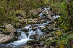 Mountain Stream. In native beech forest. Hawden river, Mid Canterbury, New Zealand. Southern Alps Royalty Free Stock Photography