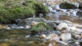 Mountain stream nature scene stock footage
