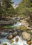Mountain stream near Albertacce in Corsica Royalty Free Stock Images