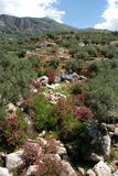 Mountain stream near Periana, Spain. Royalty Free Stock Image
