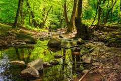 Mountain stream in the old forest Stock Photos