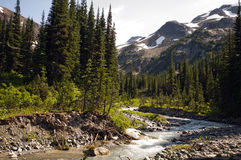 Mountain Stream. Below Tenquille mountain, Pemberton, British Columbia Royalty Free Stock Photos