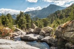 Mountain stream and pine trees at Paglia Orba in Corsica. Small stream cascading over rocks between pine trees in the mountains near Paglia Orba on the GR20 Royalty Free Stock Image