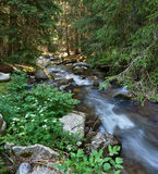 Mountain stream in Pirin nature park Royalty Free Stock Image