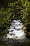 The mountain stream Stock Photography