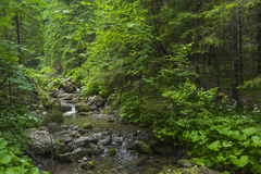 Mountain stream in the Polish mountains - Tatra Mountains. Tatra Stock Photography