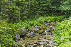 Mountain stream in the Polish mountains - Tatra Mountains. Tatra Stock Image