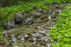 Mountain stream in the Polish mountains - Tatra Mountains. Tatra Royalty Free Stock Photography