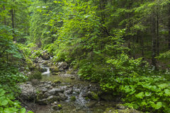 Mountain stream in the Polish mountains - Tatra Mountains. Tatra Royalty Free Stock Photos