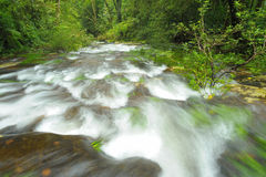 Mountain stream in the rainforest. Stock Images