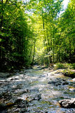 Mountain stream. With rays of light breaking through the branches Royalty Free Stock Photos