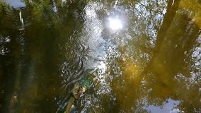 Mountain stream with reflection in water sunlight. The mountain stream with reflection in water sunlight stock footage