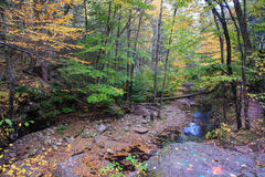 Mountain Stream Ricketts Glen Pennsylvania Royalty Free Stock Images