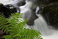 Mountain stream with rocks and ferns. Close-up Royalty Free Stock Image