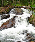 Mountain Stream. Stream in the Rocky of Mountains of Colorado royalty free stock image