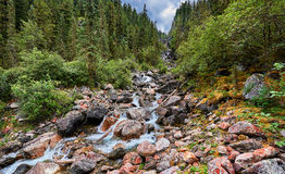 Mountain stream running in the narrow forest gorge Stock Photo