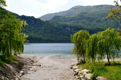 Mountain stream and salad green weeping willows in spring at lake Como. Royalty Free Stock Photos