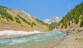 A Mountain Stream in the San Juan Mountains of Colorado Royalty Free Stock Image