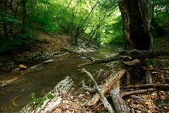 Mountain stream scenery Royalty Free Stock Photo