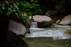 Mountain Stream. The serenity and beauty of a mountain stream inside a jungle. It is a cool refuge for thirsty and tired animals as well as travellers Stock Images