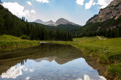Mountain stream. A small stream flowing from the mountains Royalty Free Stock Photo