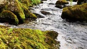 A mountain stream stock video