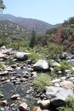 Mountain Stream. A small stream running between rocks and trees Stock Photography