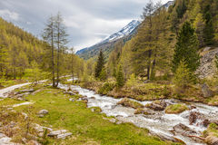 Mountain stream in South Tyrol. Mountain stream in Riva di Tures, Reintal, South Tyrol, Italy Stock Photography
