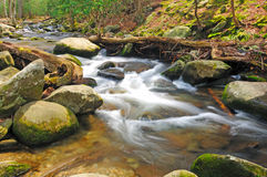 Mountain stream in the spring Royalty Free Stock Photo