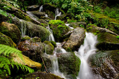 Mountain stream spring Royalty Free Stock Photos