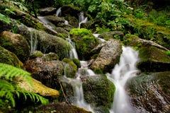 Mountain stream spring Royalty Free Stock Photos
