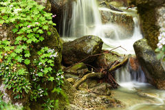 Mountain stream and spring forest flowers Royalty Free Stock Photo