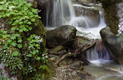 Mountain stream and spring forest flowers Stock Photography
