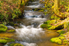Mountain Stream on a spring morning Royalty Free Stock Images