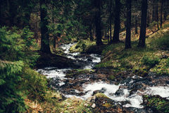 Mountain stream in spring. In the pine forest Stock Image
