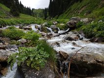 Mountain stream. Mountain stream among the stones and plants in the summer morning Royalty Free Stock Photo