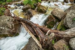 Mountain stream. Mountain stream among the stones and plants in the summer morning Stock Image