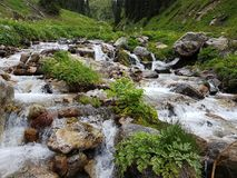 Mountain stream. Mountain stream among the stones and plants in the summer morning Royalty Free Stock Image
