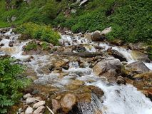 Mountain stream. Mountain stream among the stones and plants in the summer morning Stock Images