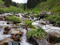 Mountain stream. Mountain stream among the stones and plants in the summer morning Stock Photo