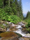 Mountain stream in the summer. Royalty Free Stock Photos