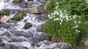 Mountain Stream in Summer. A scenic stream in the Colorado mountains in summer stock footage