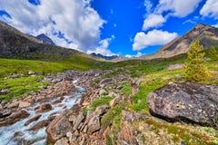 Mountain stream summer sunny day . Alpine Tundra Royalty Free Stock Photography